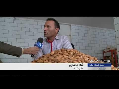 Iran Harvesting Mamaei Almonds برداشت بادام مامايي استان چهارمحال و بختياري ايران