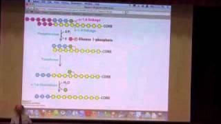Glycogen Metabolism I