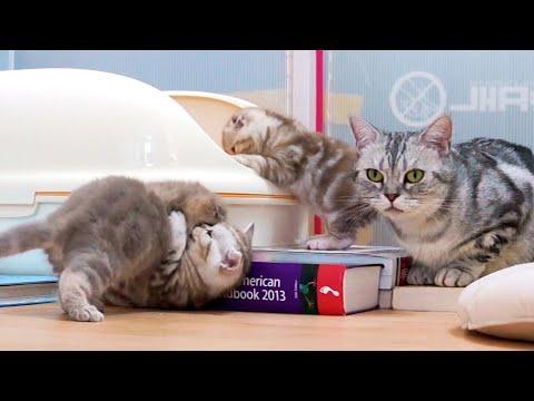 엄마 고양이의 잔소리 Cat Nitpicking [탐묘생활]