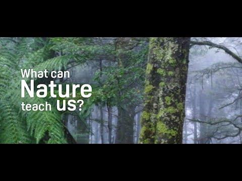Steve Parish talks about National Tree Day