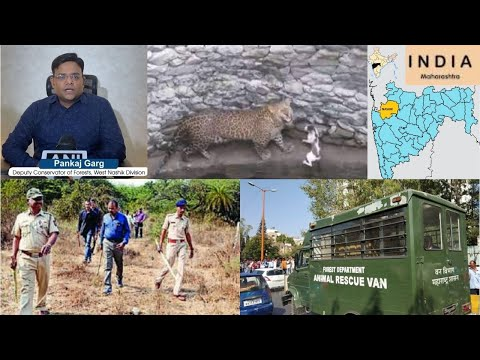 Cat defends itself against leopard after both fall in well in Nashik; video viral