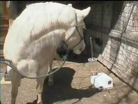 Foundered Horse Study Pt 1 of 2 on Tesla Energy Lights