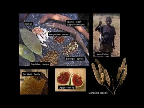 CARTA: The Evolution of Human Nutrition