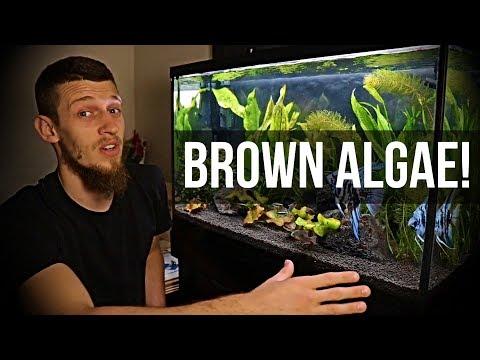 Planted 29 Gallon Day 5 | Diatom Algae!