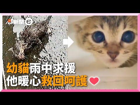 3周大虎斑貓雨中虛弱求救 被送醫、暖呵護隔天躺腿睡翻❤ 寵物 浪浪 救援