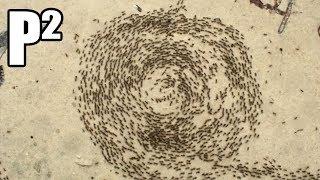 Mravenci a Spirála Smrti - P²