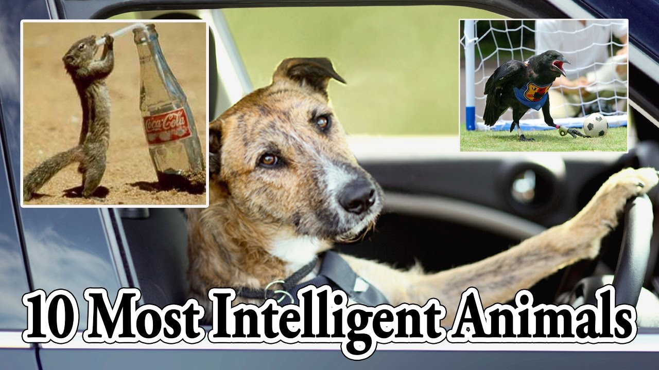 Image result for Animals Got Talent Compilation! The Most Intelligent & Cleverest From Around The World! Images