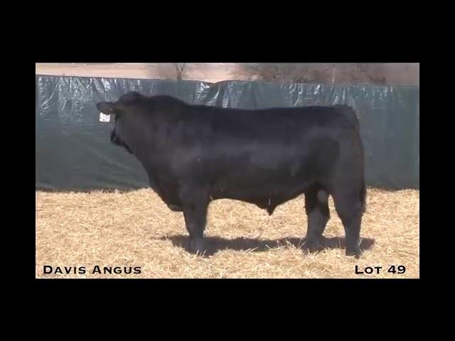 Davis Angus Lot 49