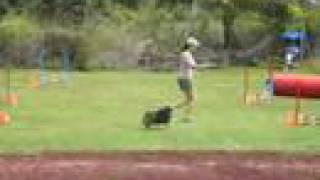 Dog Agility - Pomeranian (long Course)