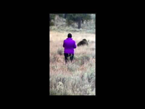 CLOSE CALL - How to get attacked by a Grizzly Bear - Yellowstone