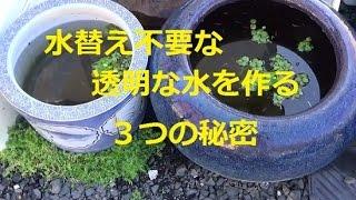 水替え不要で透明な水のメダカ水槽の秘密 作り方 3つを合わせることで完璧めだか killifish, thumbnail