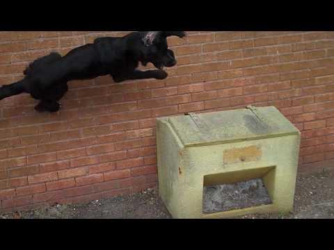PARKOUR FREERUNNING DOG TRICK - SHADOW