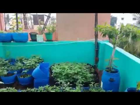 Terrace Garden Chennai July 2016