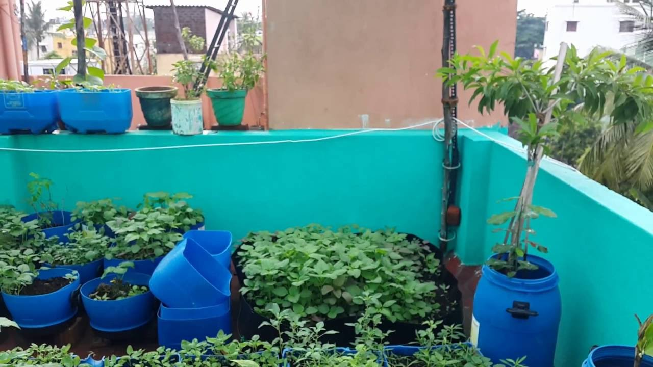 Terrace garden chennai july 2016 youtube for Terrace garden in india
