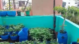 Terrace Garden Chennai July 2016