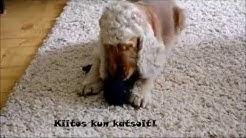 DIY: Narupallo koiralle