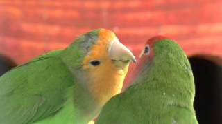 RLS VBlog#005 Французский поцелуй :)  ... с языком...