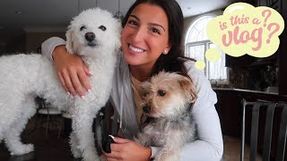 meet & wash my dogs w/ me! | is this a vlog ?? | giuliana