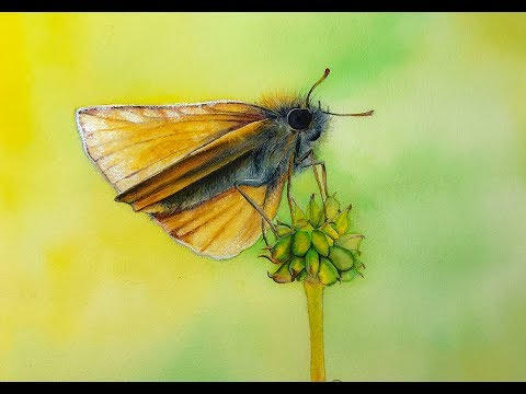 Watercolor MOTH Butterfly Painting Demonstration