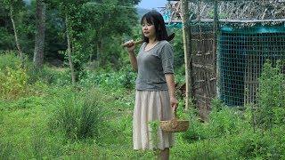 【二米炊烟】摘些树叶磨成汁,做一道传统美食:神仙豆腐