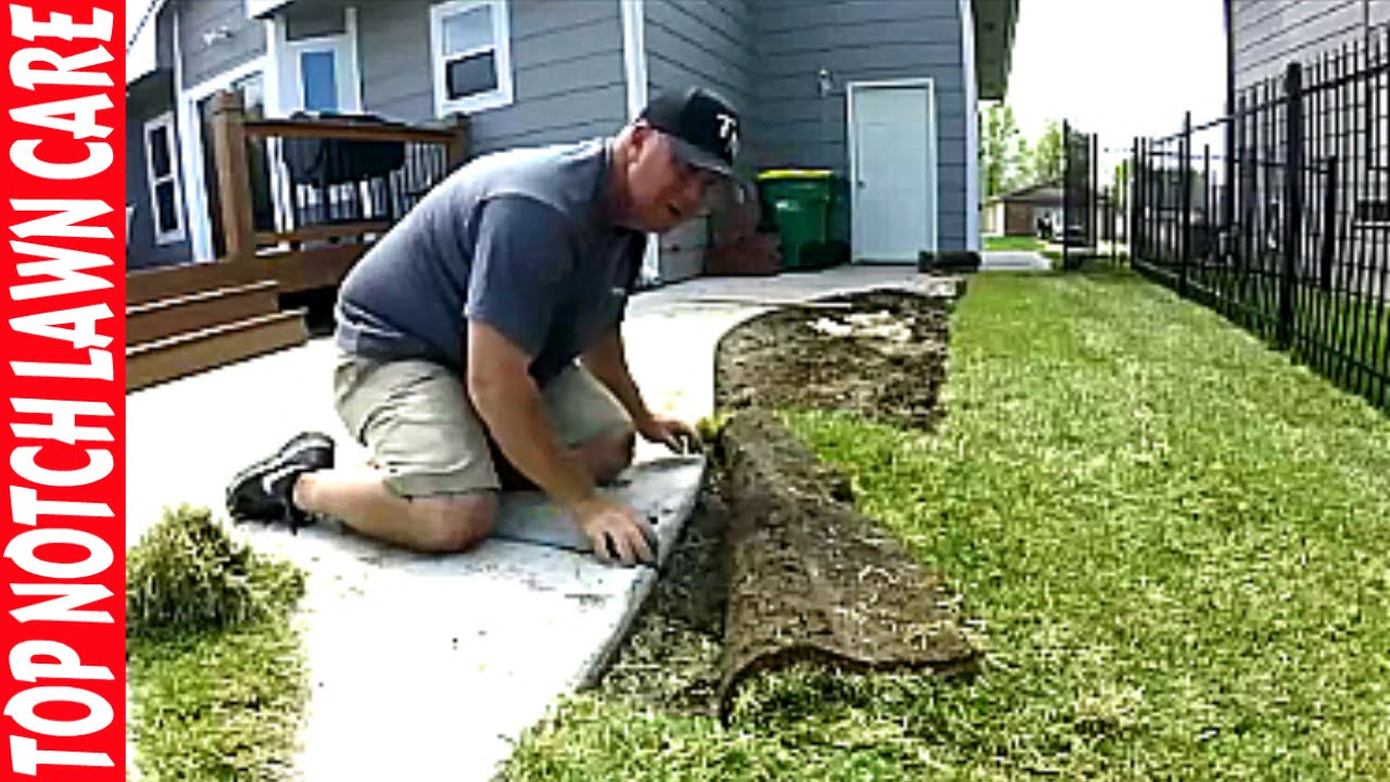 How i install sod grass around sprinklers and curved edges for Care for new sod