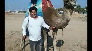 Tourism For All Accessible Tourism Disabled Tourist Guide In Morocco