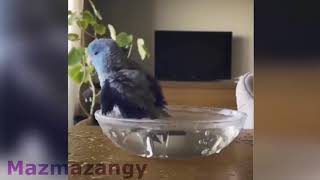 cute animals being weird funny Animals Compilation 1 new HD 2018