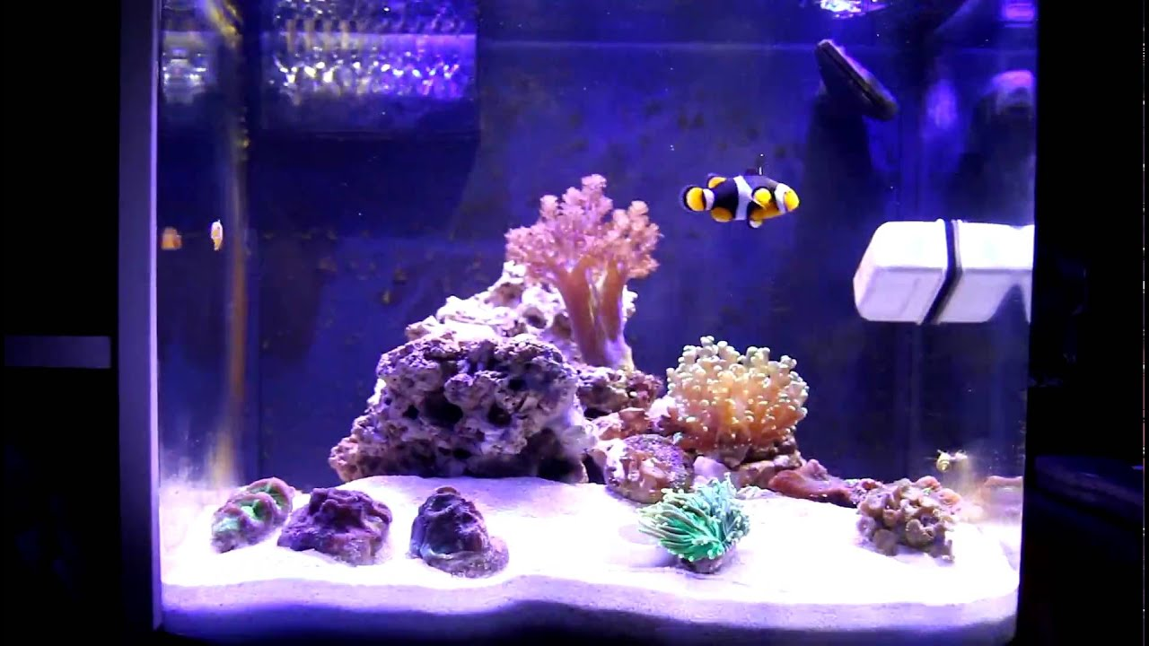 Nano cube 12dx led saltwater tank youtube for Cube saltwater fish tank