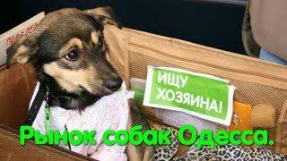 Собачий рынок. Market of dogs. Одеса. Староконный рынок. Puppy. VLOG DOG. Птичий рынок. Удав. Собака