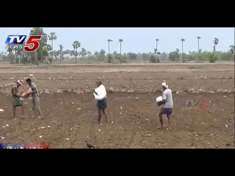 Krishna Delta in Dilemma | No Water for Seed Beds | Annapoorna : TV5 News