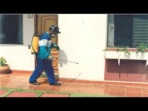 Curso Como Montar e Operar uma Empresa de Controle de Pragas Domésticas - Controle de Formigas