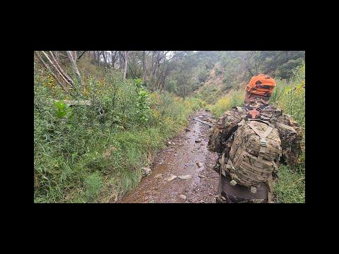Sambar deer hunt. Gone wrong (how did that happen)