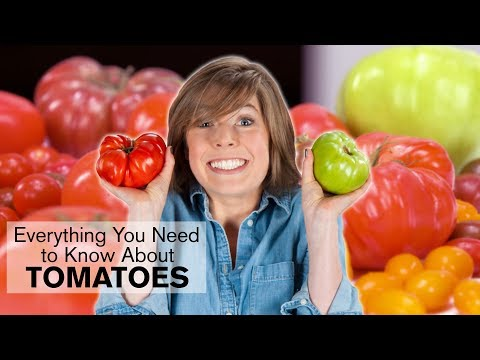 Everything You Need to Know About Tomatoes | Dish with Julia | Allrecipes.com