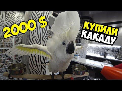 Вопрос: Какой породы завести большого попугая с свободным перемещением по дому?