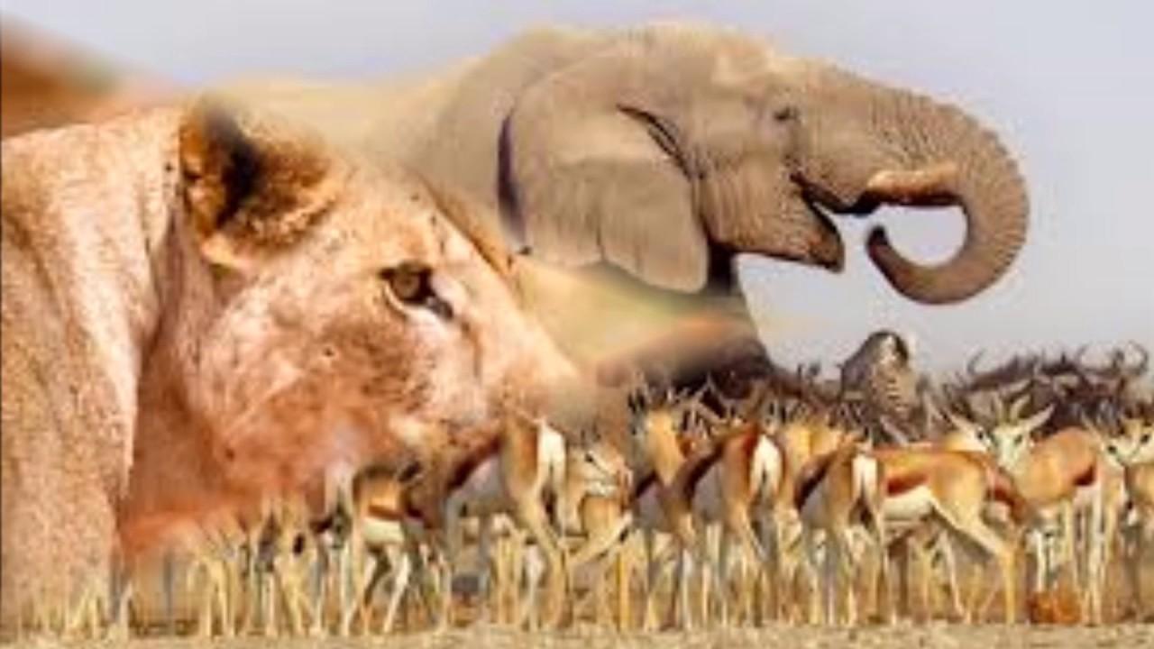 afrique-paysage-animaux