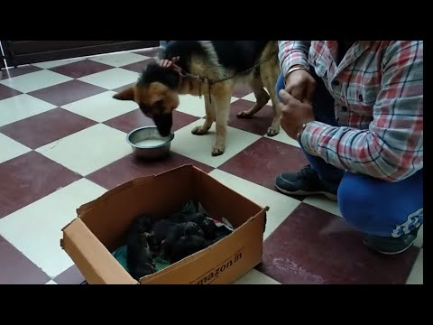 Pet Care - After Delivery Dog Diet - Bhola Shola
