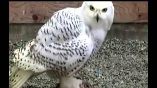 Полярные животные и птицы - Презентация для детей. Развивалки.