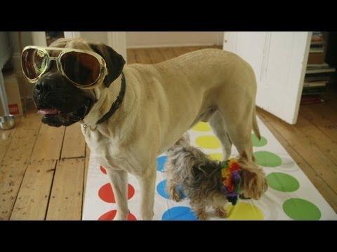 Crazy Puppy Party