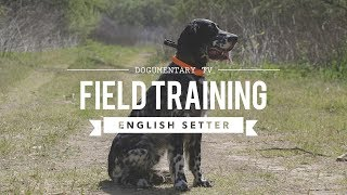 FIELD TRAINING: ENGLISH SETTER