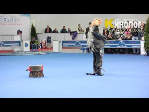 "14 Dog Show ""Eurasia  2012 / Russia / Moscow"". Freestyle."