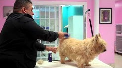 Dogs In Style Live Demo at Cheryls Pet Salon with Joey Villani