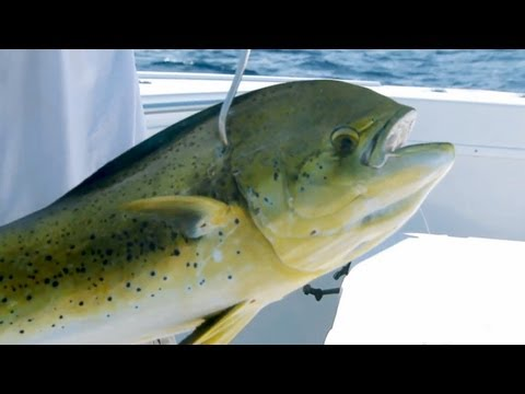 "Saltwater Experience: ""Dolphin Fishing with Scott Walker"" Season 6 