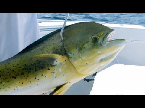 "Saltwater Experience: ""Dolphin Fishing with Scott Walker"" Season 6 | Episode 6"