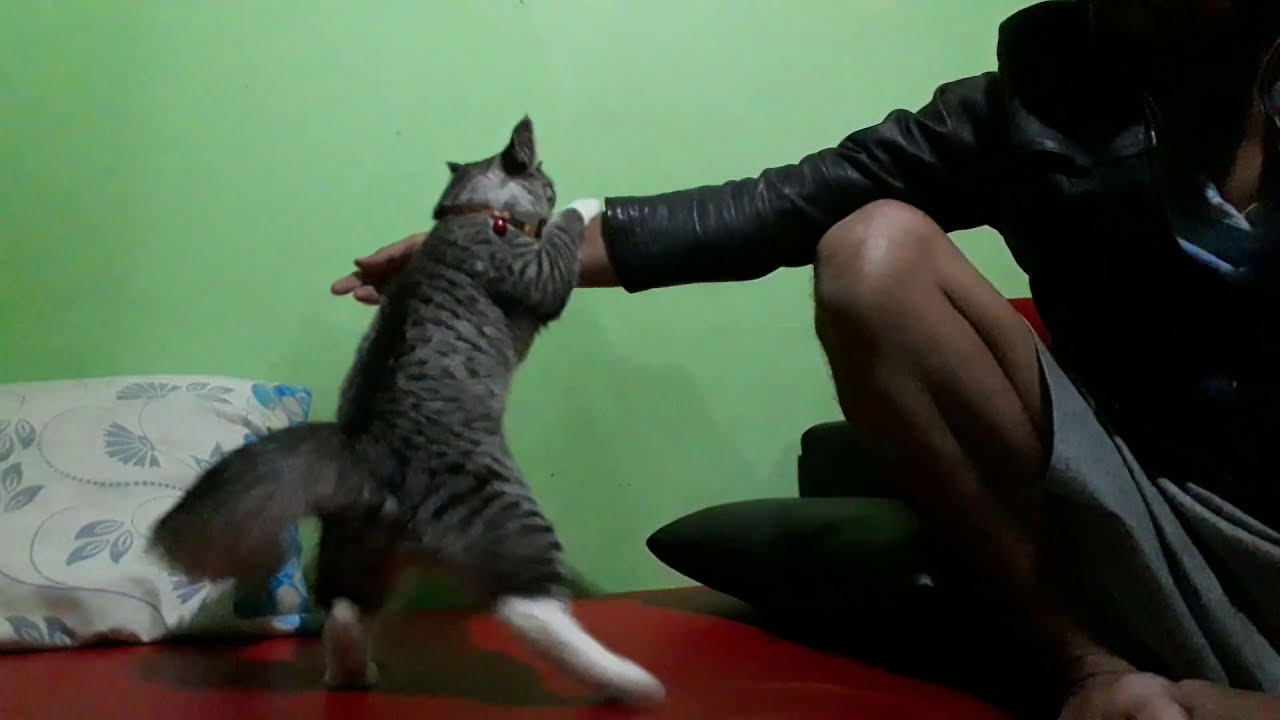 Kucing Suka Gigit Tangan Youtube