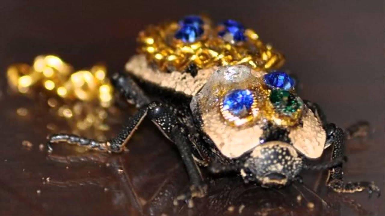 escarabajo de oro vivo con gemas youtube
