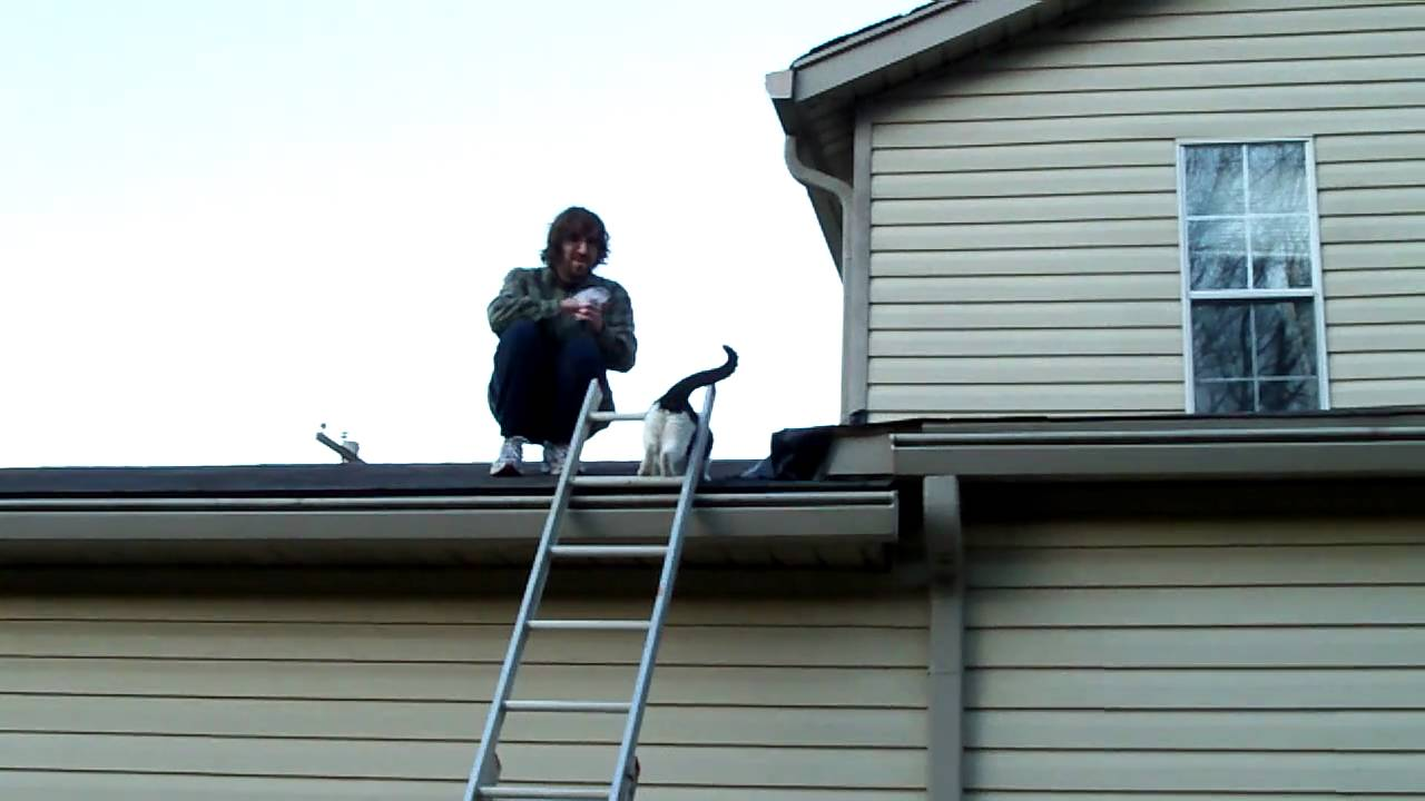 Pet Cat Climbs Up The Ladder Onto The Roof Youtube