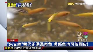 民眾控溫泉魚咬傷流血  業者:使用無牙朱文錦