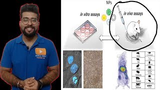 This gene therapy lecture explains the process of in vivo gene therapy and the use of in vivo gene t.