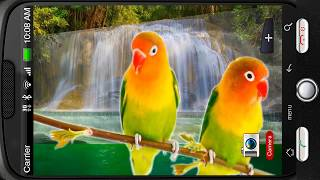 Lovebirds Parrots Waterfall Deluxe 3D Personalization for Android [PiedLove]
