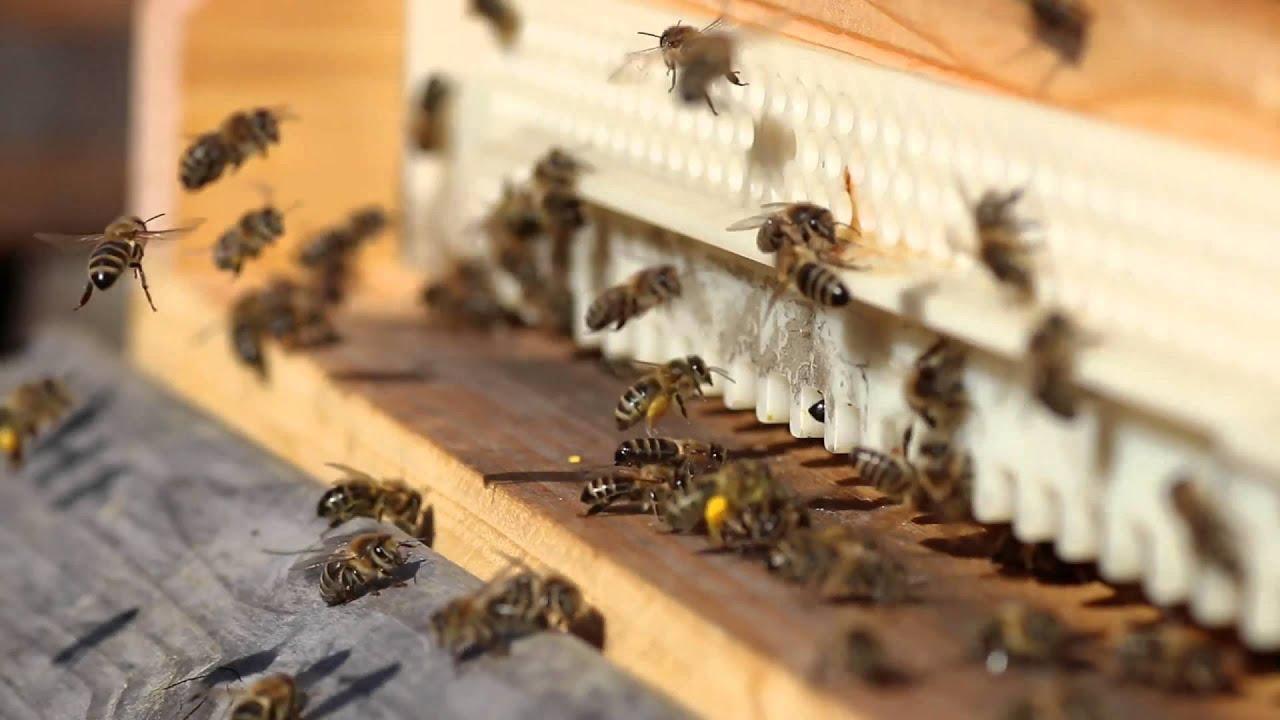 Oster Bienenflug